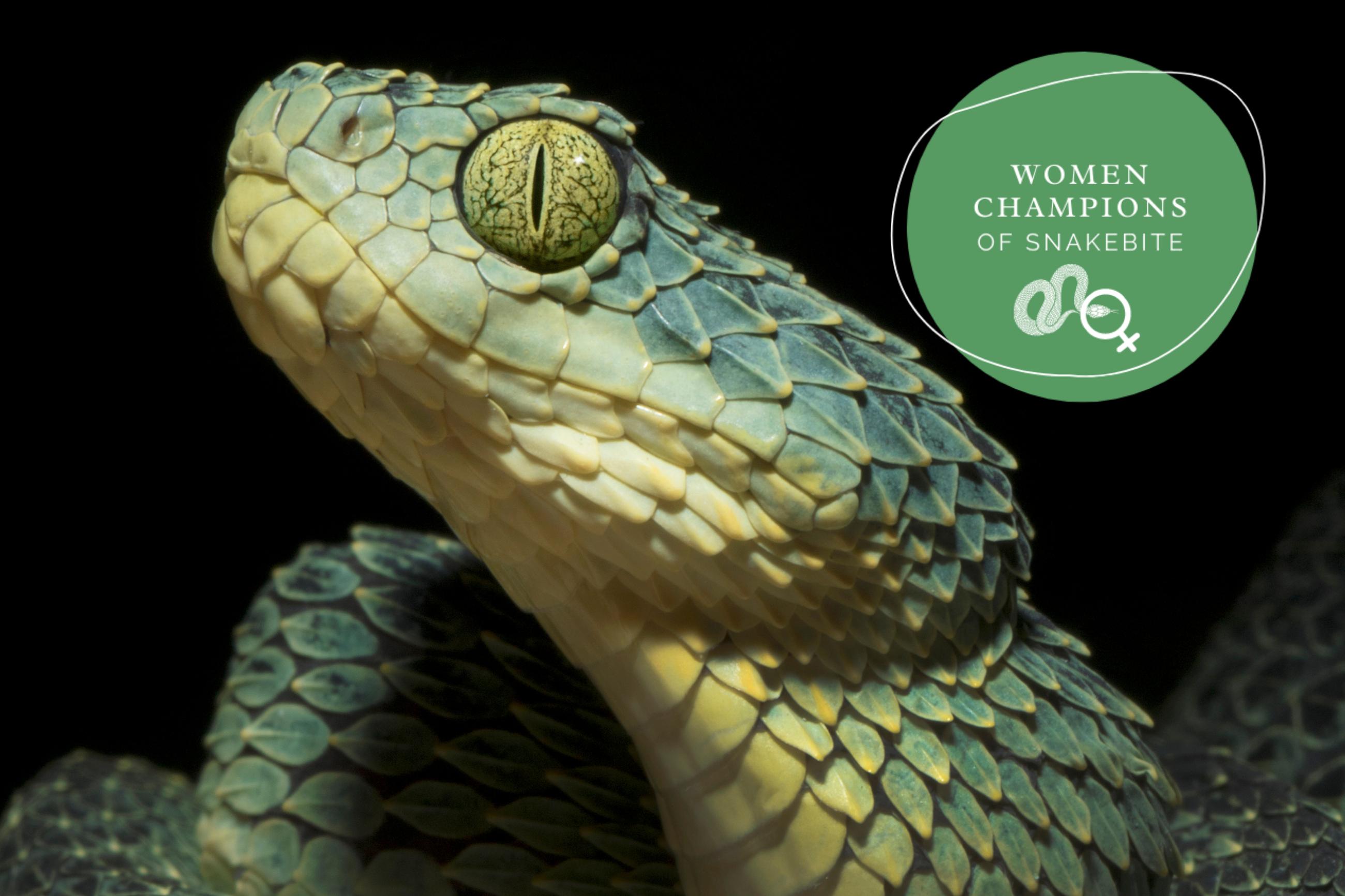 women snakebite